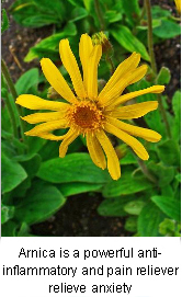 Arnica and Back Pain