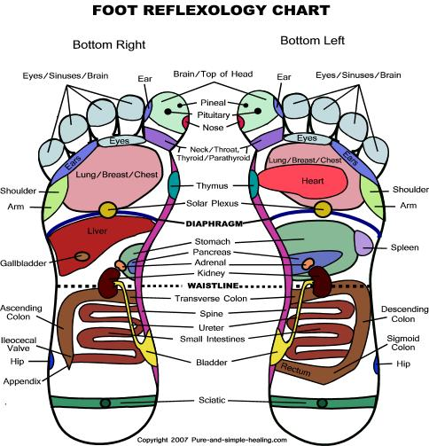 Foot Reflexology Chart 1