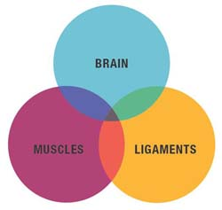 forces behind posture: brain, muscles, ligaments