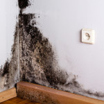 Little-Known Treatment to Attack Black Mold Syndrome (and Mold Allergies)
