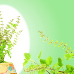 6 Best Herbs to Relieve Stress
