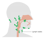 lymph nodes neck