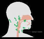 lymph nodes neck